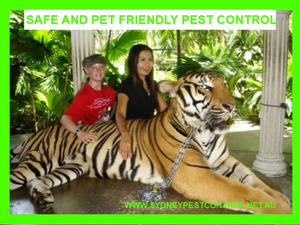 Sydney Pest Control Chippendale is a safe pet friendly pest control company.