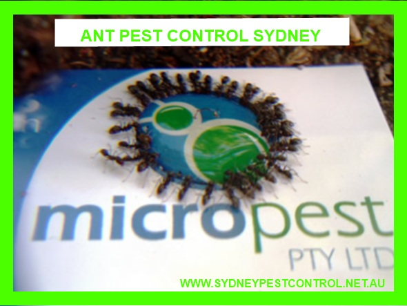Pest Control Ants.