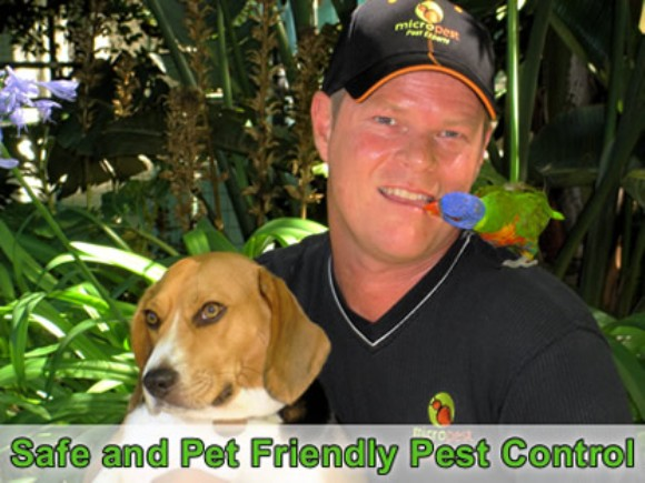 pest control Annandale